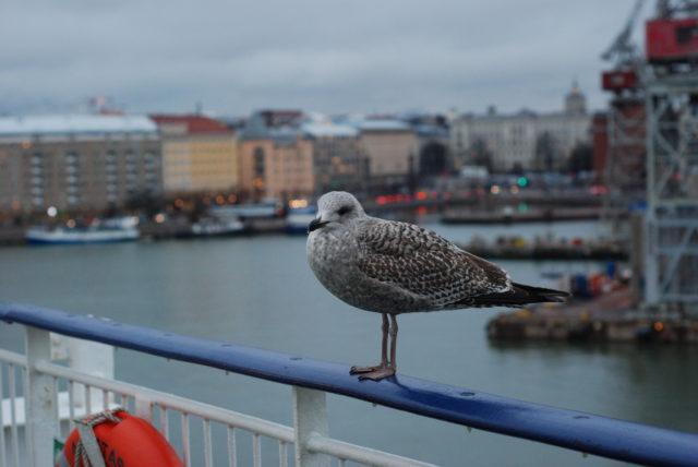 Хельсинки с парома в порту, чайки подпускают на расстояние вытянутой рук
