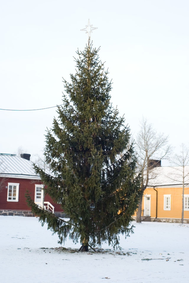 Уже не новогодняя елка в крепости