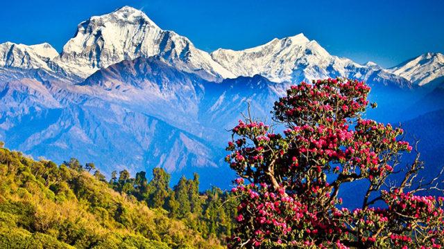 Виза в Непал для россиян в 2017 году